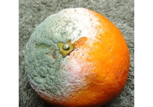 Mold in orange