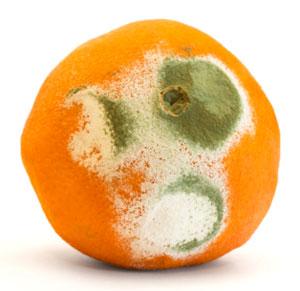 annoying orange mold