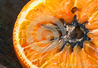 can mold grow on the inside of an orange