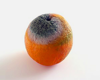 mold inside of orange,