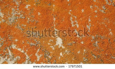 orange county mold attorney