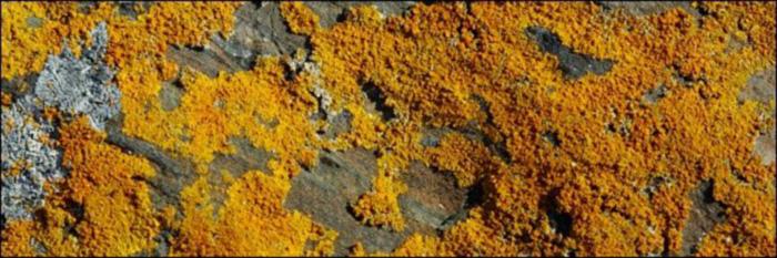 orange fungus balls