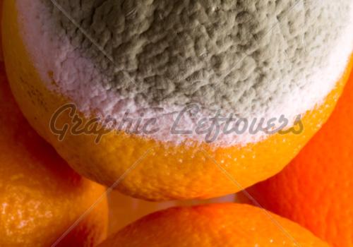 white mold inside an orange,