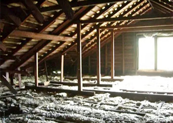 Attic Smells You Should Never Ignore