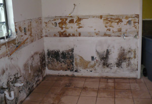 How Mold Removal Canada
