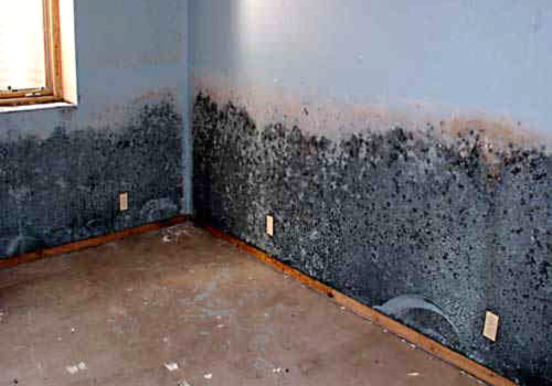 Mold Removal Canada best price