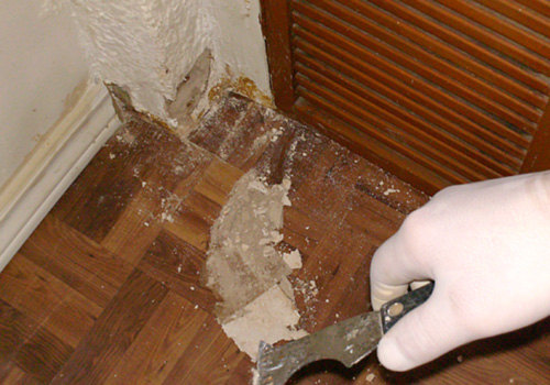Mold Removal Canada best value