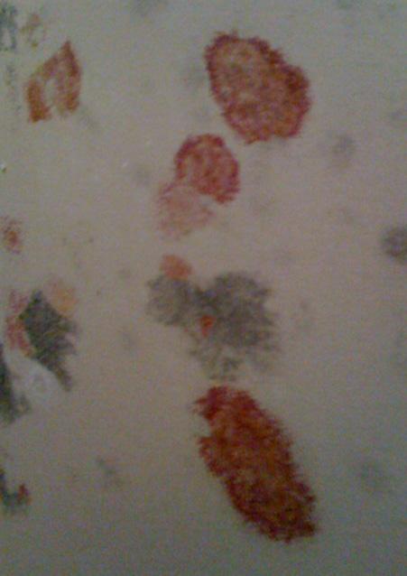 Orange mold removal calgary