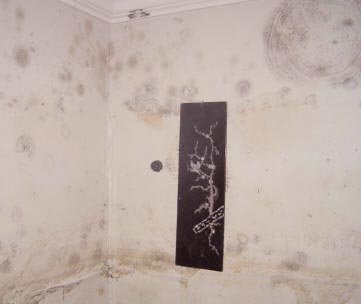 Remove mold resisteant on drywall