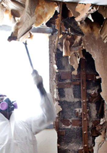 attic mold removal toronto