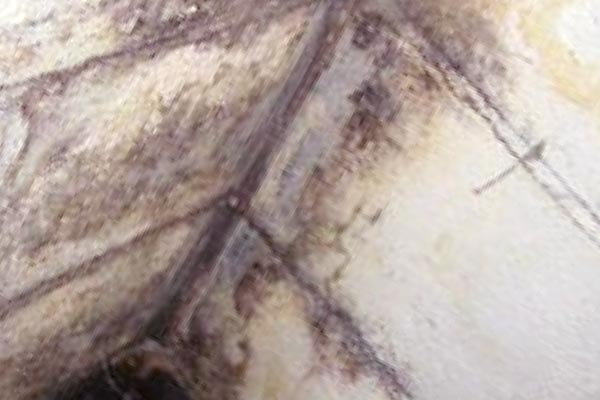 basement mold and mildew