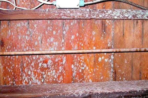 basement mold prevention