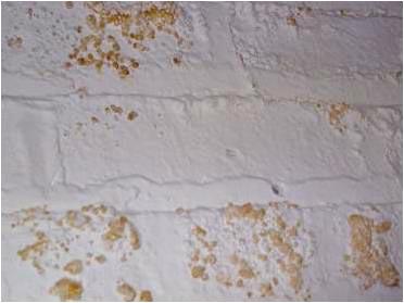 basement mold testing