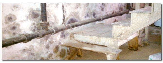 basement mold types