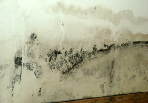 black mold and cancer