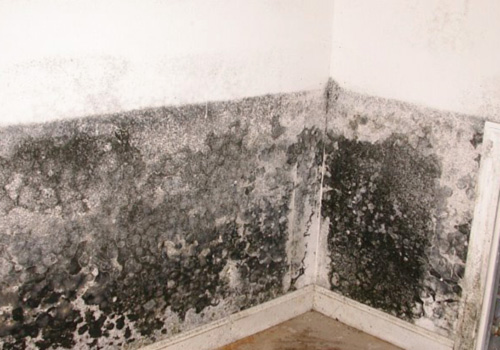 black mold apartment