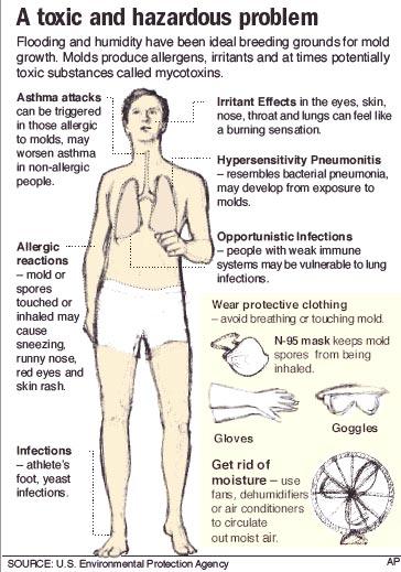 black mold health effects long term