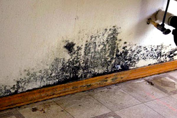 black mold images pictures