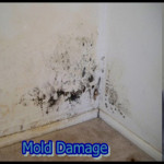 black mold in apartment