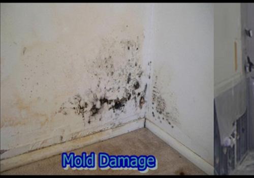 Black Mold In Bathroom Apartment black mold health, pictures, removal in bathroom   orange mold