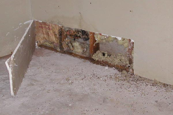 Black Mold In Basement After Flooding