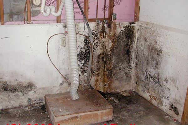 black mold in basement bathroom