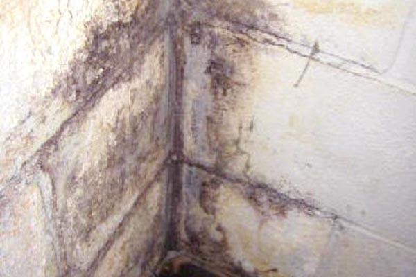 black mold in basement carpet