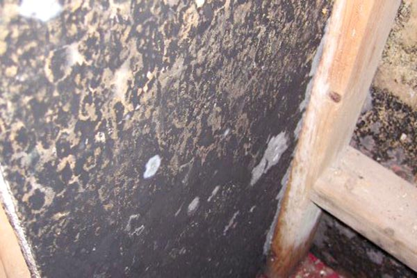 black mold in basement closet