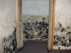 black mold in basement health effects