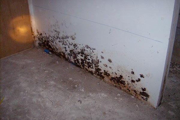 black mold in basement health