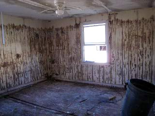 black mold in basement while pregnant