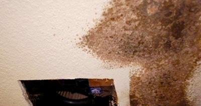 black mold in bathroom caulk