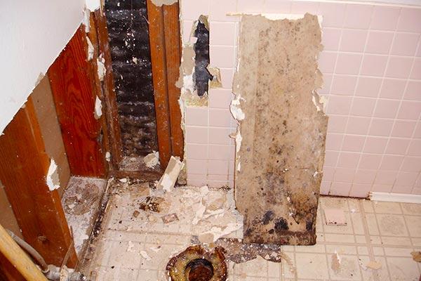 black mold in bathroom dangerous