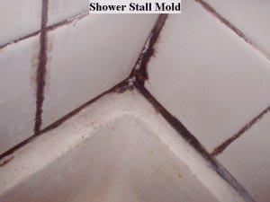 black mold in bathroom floor