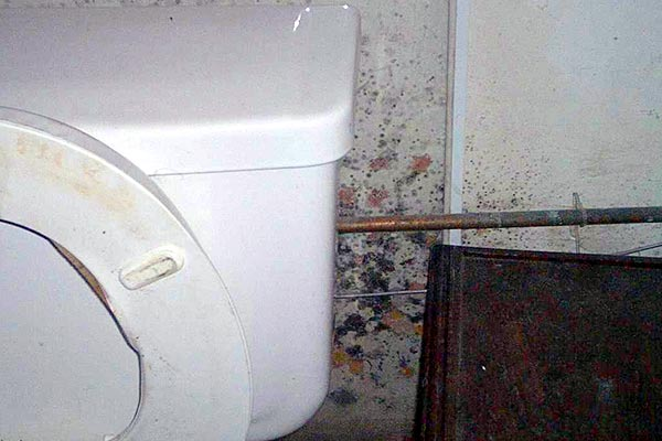 Black Mold In Bathroom Health Hazard black mold in bathroom, floor and shower | orange mold