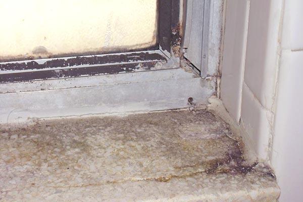 black mold in bathroom removal