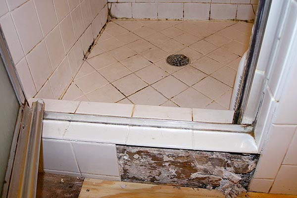 black mold in bathroom shower
