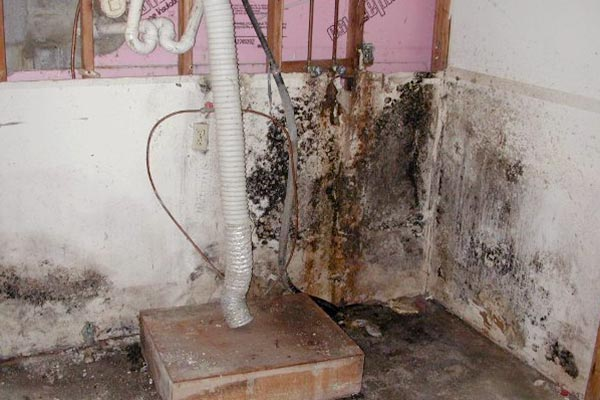 black mold in house images