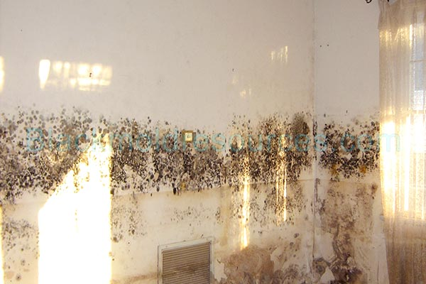 black mold in house pictures