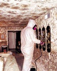 black mold in house symptoms
