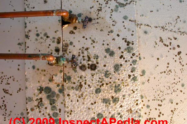 black mold in house walls