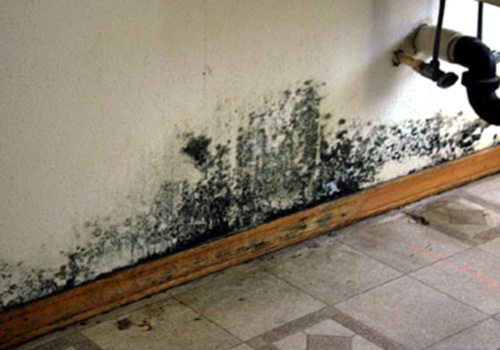 black mold in house