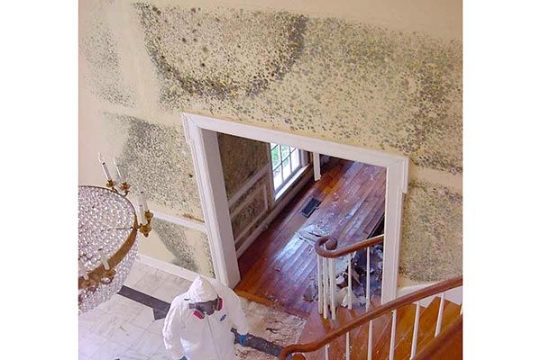 black mold in houses health risks