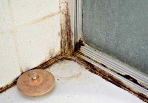 black mold in shower