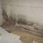 black mold in sinuses