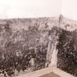 black mold pictures on ceiling