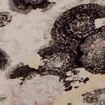 black mold rash pictures