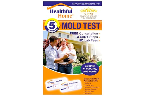 black mold test kit menards