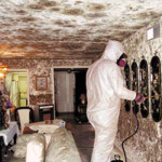 black mold treatment