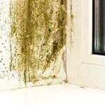 Black Mold Around Window Sills